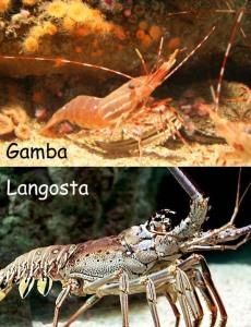 Gamba y Langosta