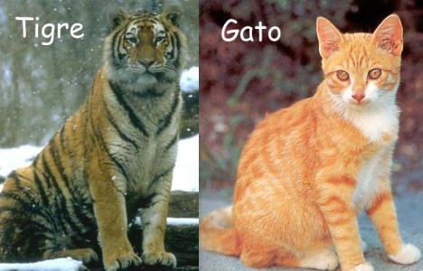 Tigre y Gato copy