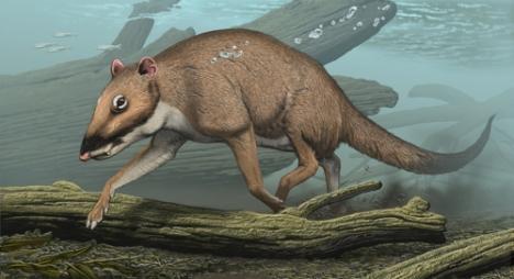 Ilustración de un Indohyus por Carl Buell.