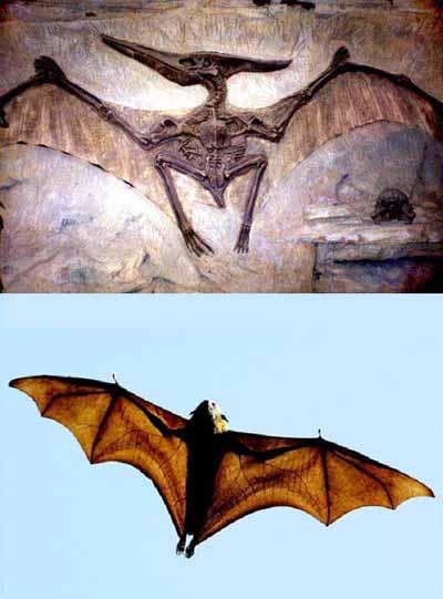 Pterodáctilo (arriba) y Zorro volador
