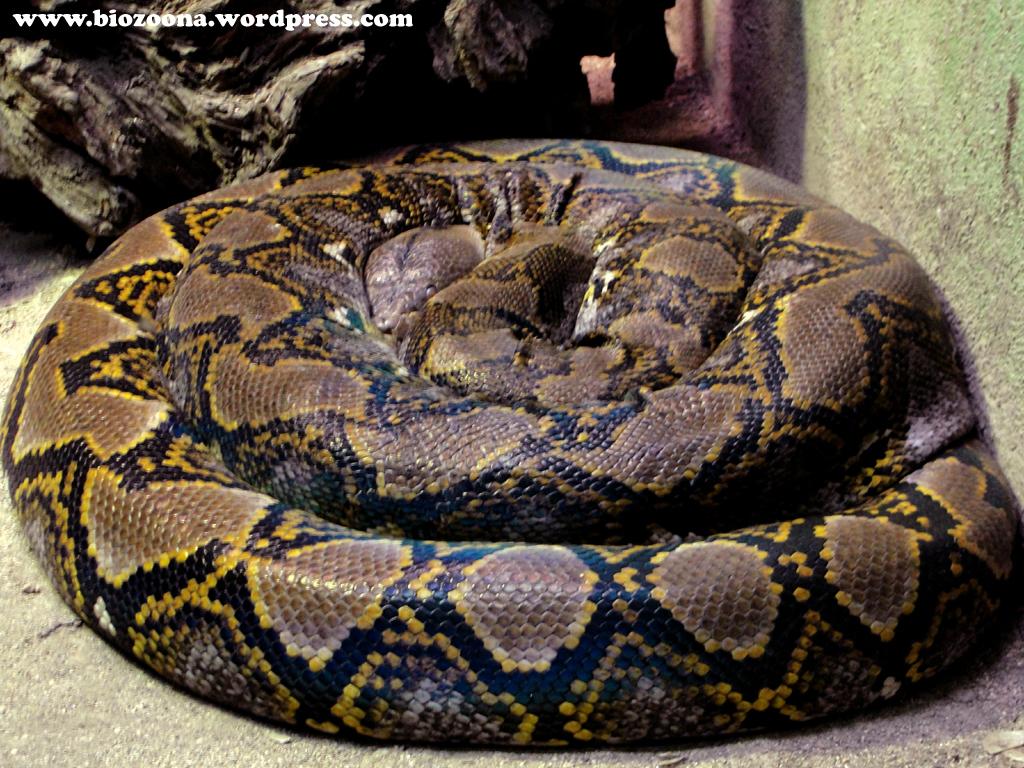 Q Son Los Reptiles Reptiles | La BioZoona