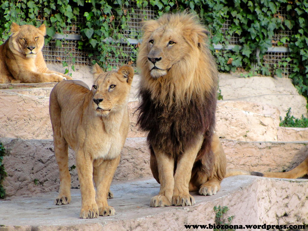 animales macho y hembra